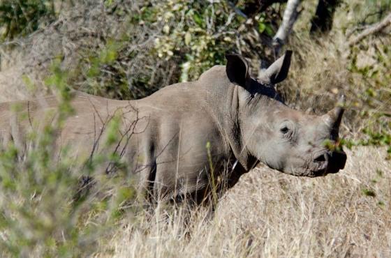 Rhino4230m